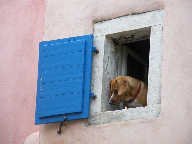 Seeing Light - Dog in Window
